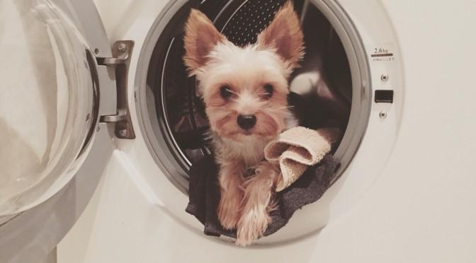 洗濯機と愛犬の物語